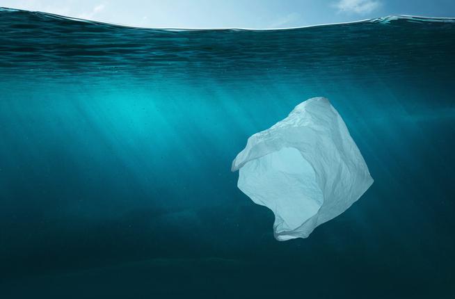 environmental social activists